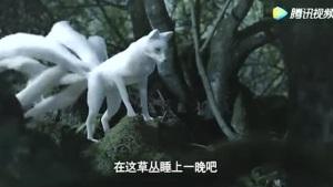 aldisurjana_rubah_ekor_sembilan_huli_jing_kitsune_gumiho_china_jepang_korea